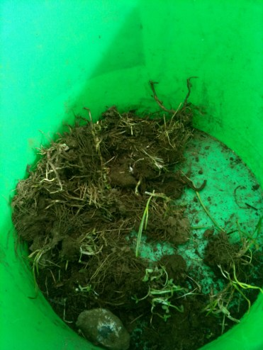 we place unwanted weeds from the soil on the green bucket