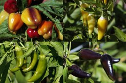 biodiversity increase product variety and choice