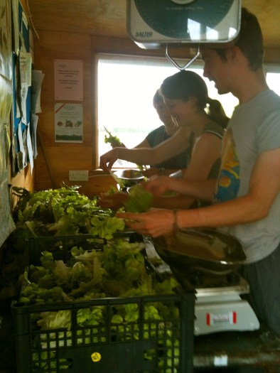 Selecting salads for weighing on the scales