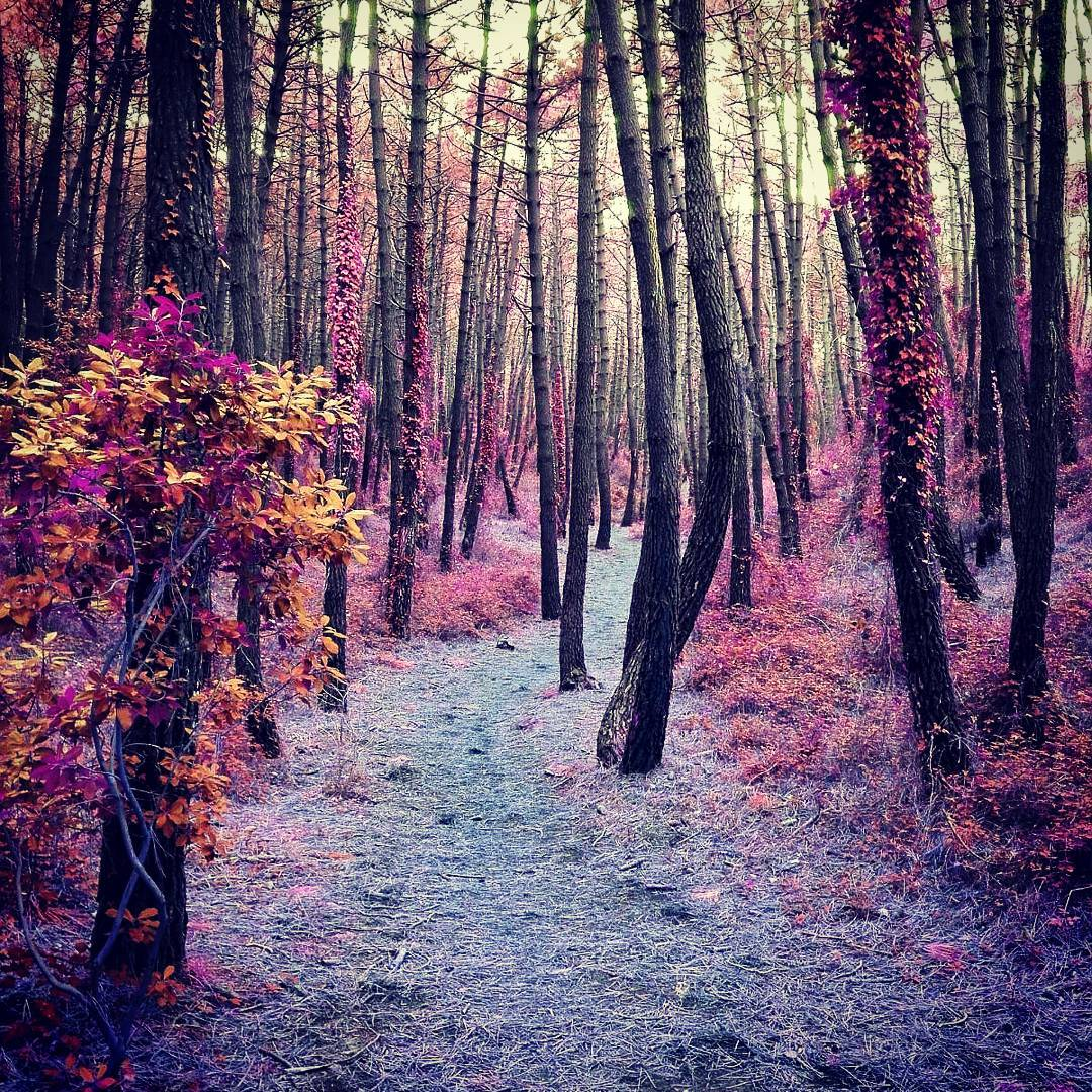 Bosque de color