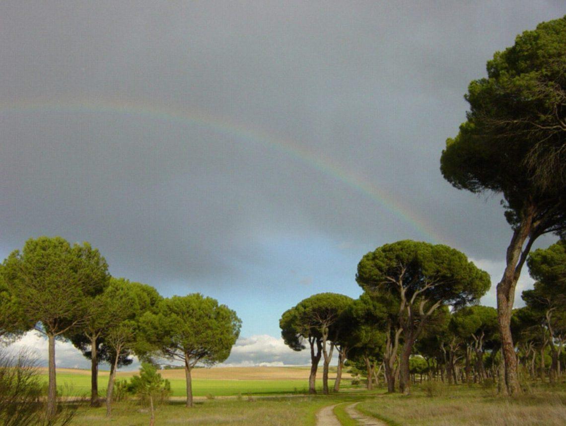 Pinar con arco iris