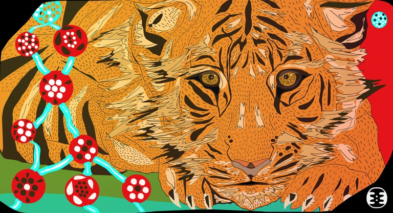 tigre1671tigre17