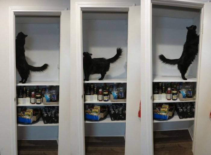 mochi pantry