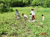 brothers-and-cousins-harvesting