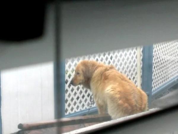 happy-ending-rescue-dog-alfie-03