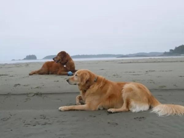 happy-ending-rescue-dog-alfie-08