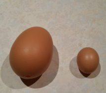 Extra Large Egg on Left Small starter egg on right