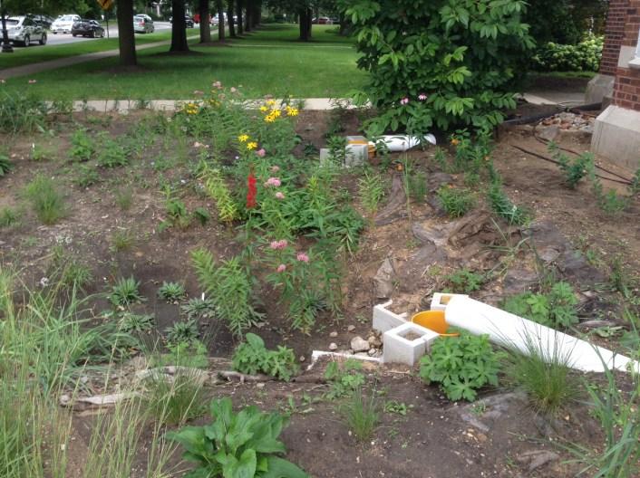 Oakton rain garden