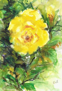 day 2, yellow rose , watercolour card painted from life