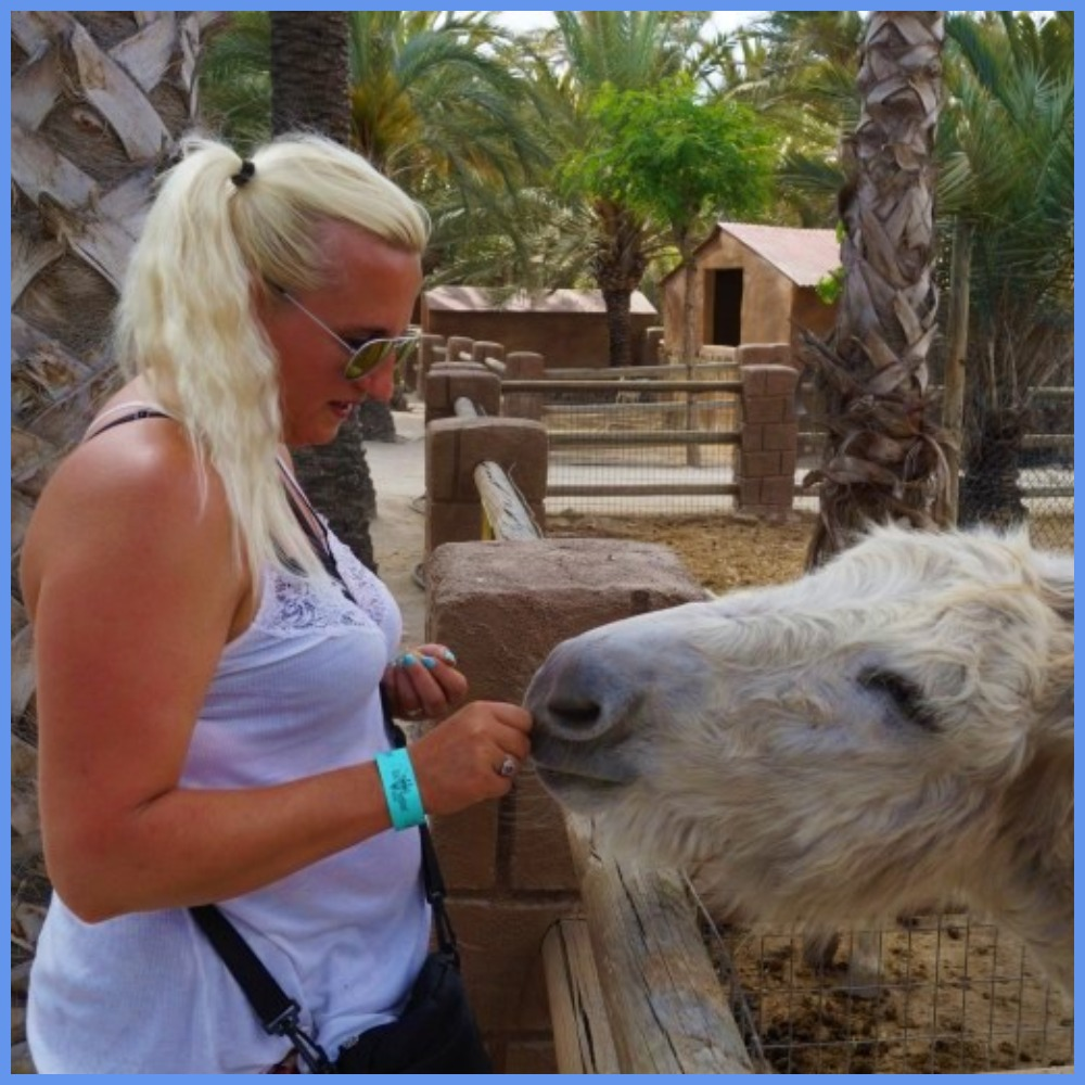 Feeding donkey Rio safari Elche