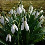 Mõni lill õitseb kevadel ja mõni sügisel. On asju, mida ei saa tagant kiirustada. Nad toimuvad siis kui on nende aeg.