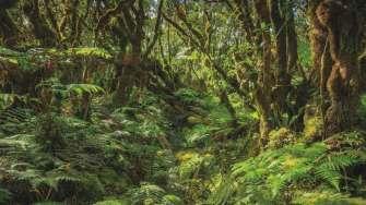 havai-molokai-adasi-satiliyor-12-evdenhaberler