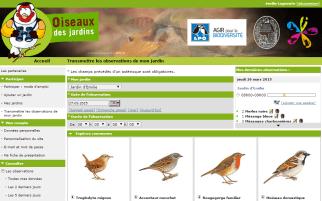 oiseau_des_jardins