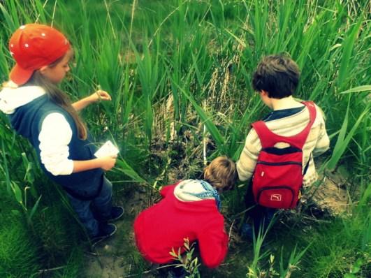 Enfants dans les roseaux