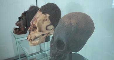 Nouveaux résultats ADN sur les crânes allongés de Paracas