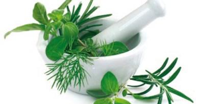 Plantes médicinales : l'attaque sournoise de l'Académie de pharmacie, le pouvoir actuel pro pharmacien?