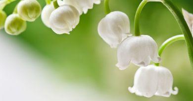 RONNA HERMAN VEZANE: Message de l'Archange Michel de mai 2019 – « Le nouvel âge de la conscience spirituelle / humaine »