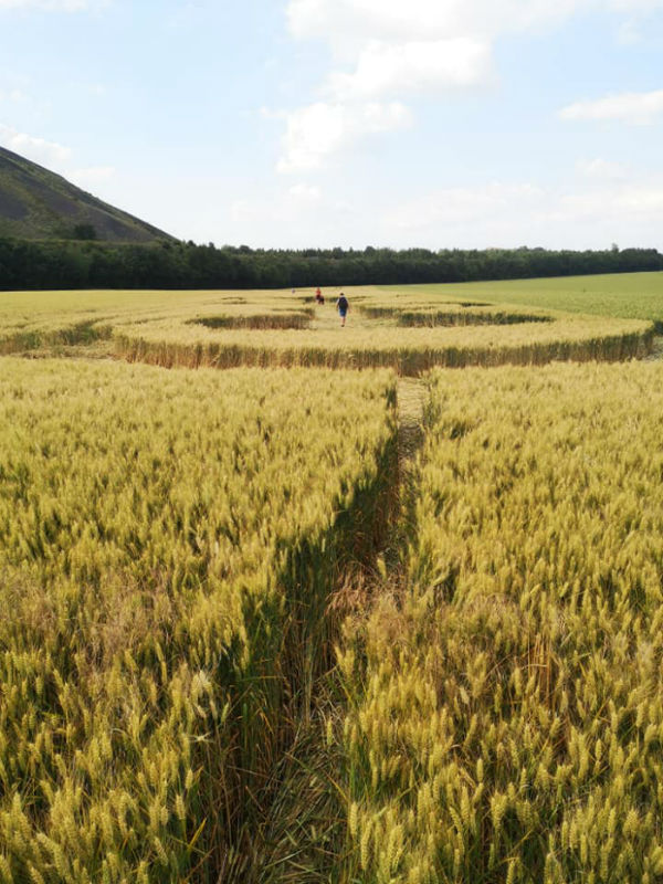 crop-houdain-3