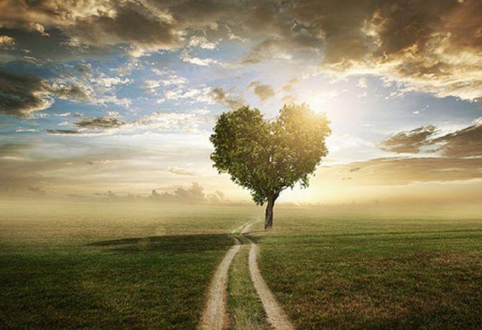 un-chemin-plus-stable-arbre-coeur
