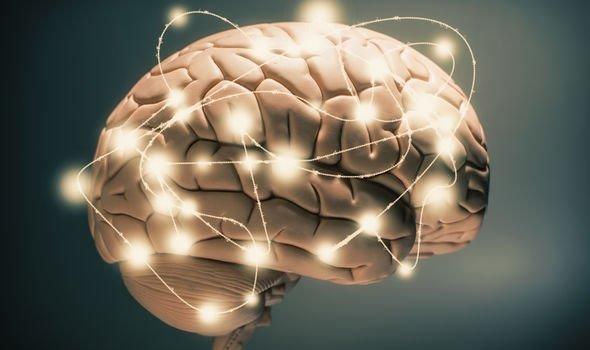 brain-2063576