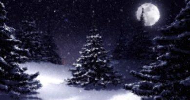 Le dossier de Noël : origines et évolutions d'une fête