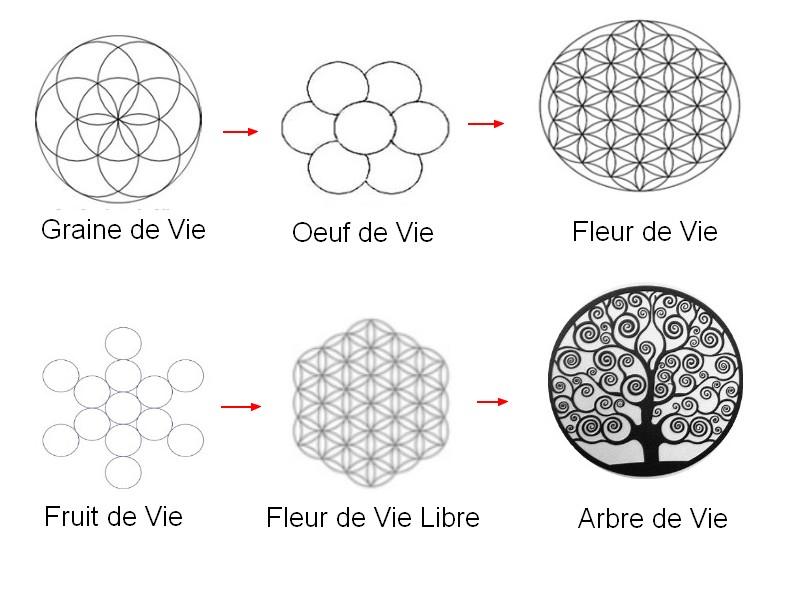 fleur-de-vie-graine-de-vie1_3757