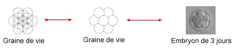 graine-de-vie_3755