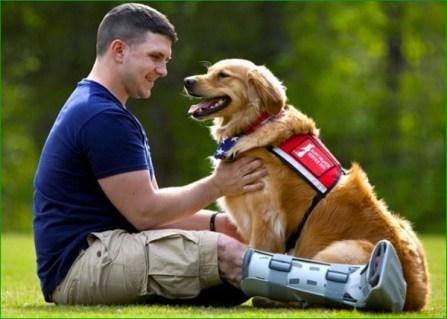 SP009_veteran-chien-therapie