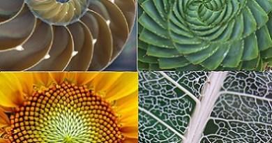 Existe-t-il une intelligence à l'œuvre dans la nature ?