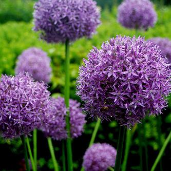 tuinaanleg_bloemen