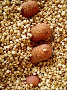 Hand in Quinoa