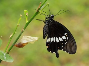 butterfly-change