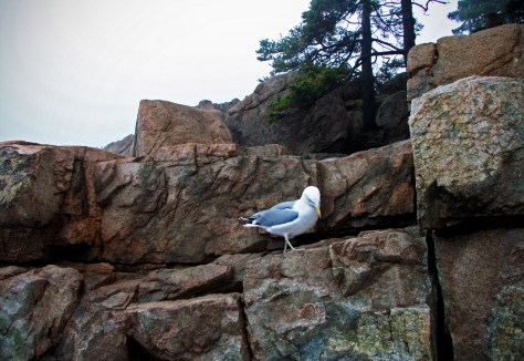 Acadia National Park, Maine © Eve Bernhard. April, 2013