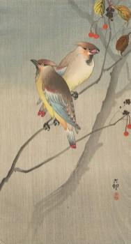 OharaKoson2JapaneseWaxwingsonTwigwithRedBerries_700px