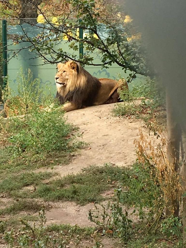 Vienna zoo 5