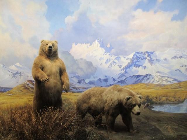 Natural History Diorama 015