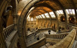 natural_history_museum_stairs_wallpaper_-_1280x800