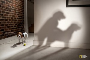 Catchy-Funny-Ad-Day_Best-Commercial-Ad-Campaign_National-Geographic-Channel-Dog-Whisperer-Parents