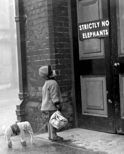 funny-elephant-pet-little-kid