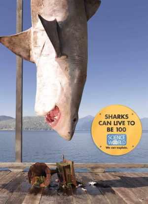 Science_World_Shark