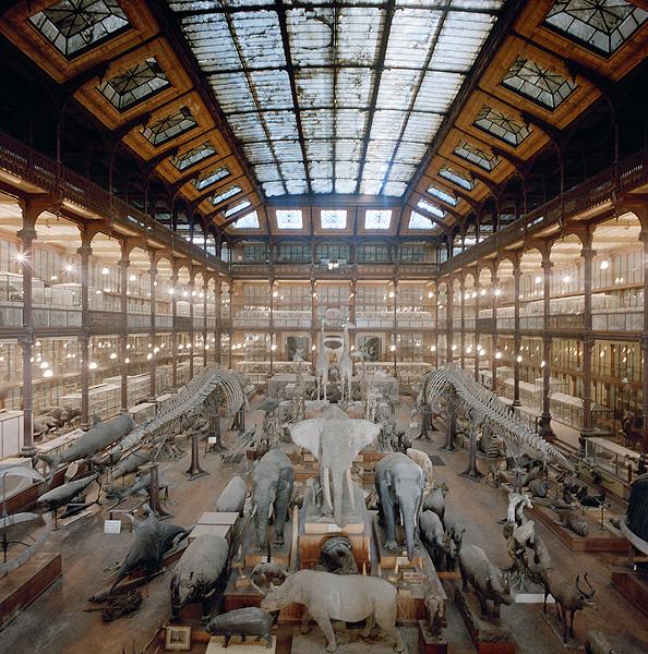 «Museología», esa Palabra…