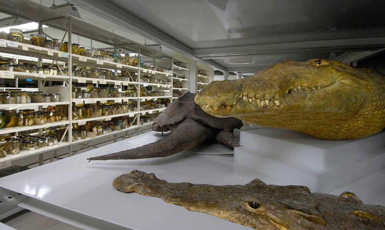 Checklist para el Acceso y Uso de Colecciones en Museos