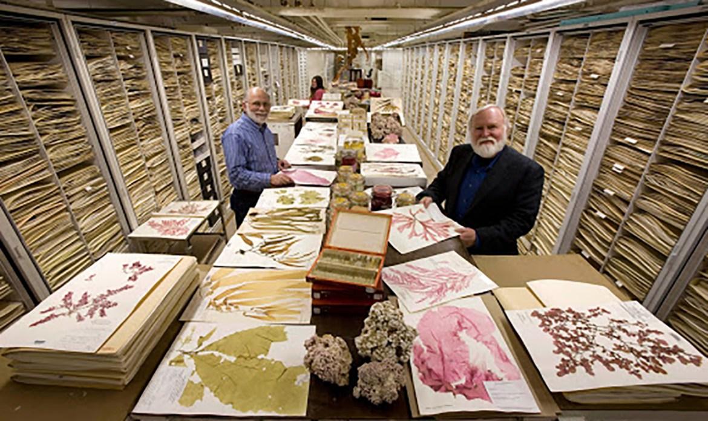 Museos Locales y Gestión de Colecciones