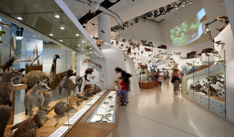 Museos y Expansión del Conocimiento
