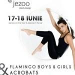JezooFlamingo