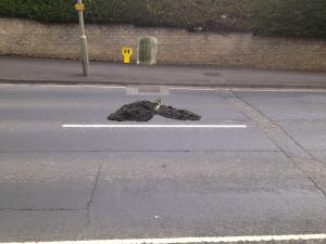 pothole grave