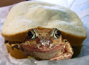 frogsandwich
