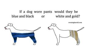 dogpants3