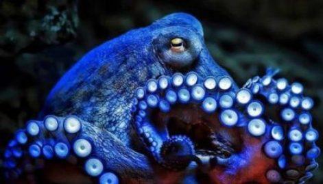 octopus3-e1476397538898.jpg?resize=471,2