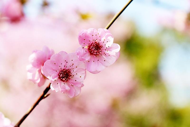 Et si avant le printemps…